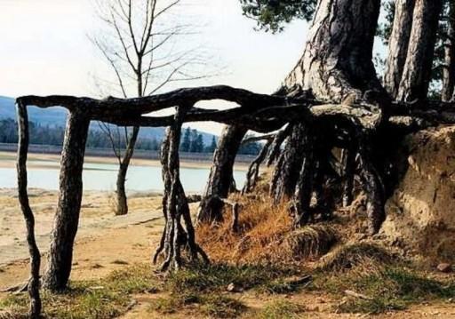 Les arbres les plus bizarres du monde_araignée_wp