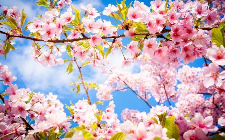 Le printemps_fleurs_wp
