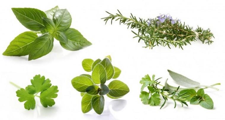 Les herbes aromatiques_5_wp