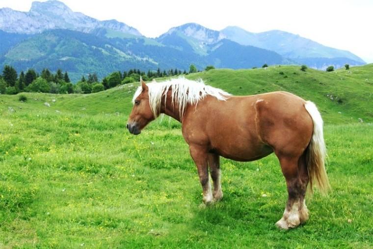 Les équidés_ongulés-poney_wp